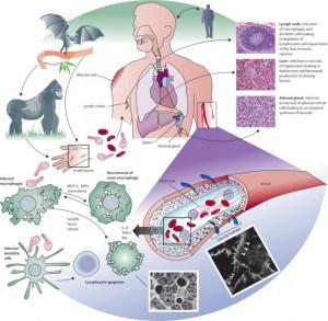 ebola. cuidados
