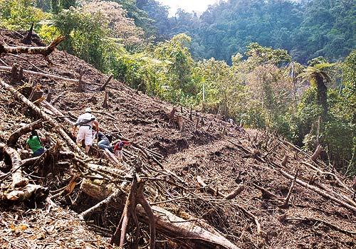 Amazonía. deforestación